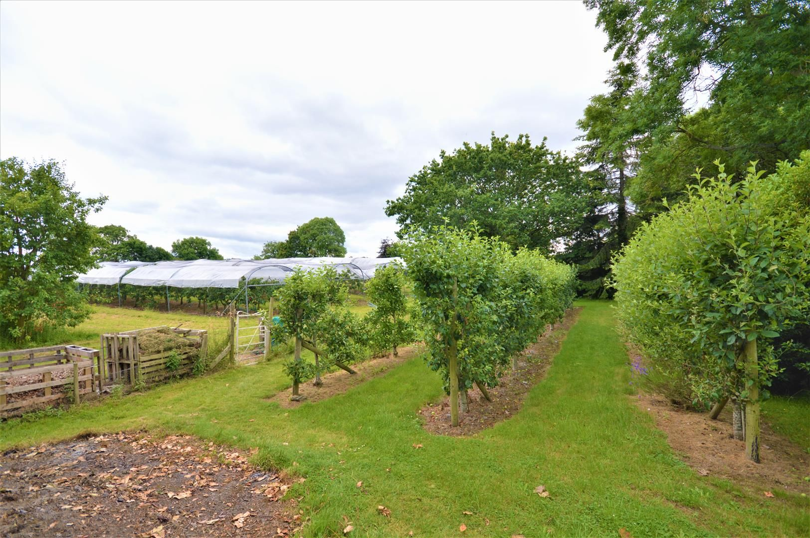 4 bed detached for sale in Dilwyn 28
